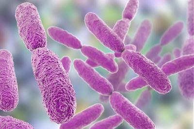 Klebsiella bacteria illustration