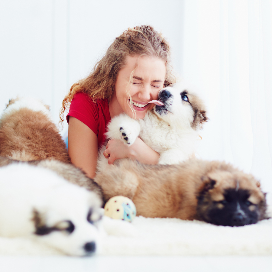 Can pets licking your mouth contribute to gum disease?